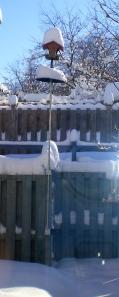 The bird feeder in our backyard.